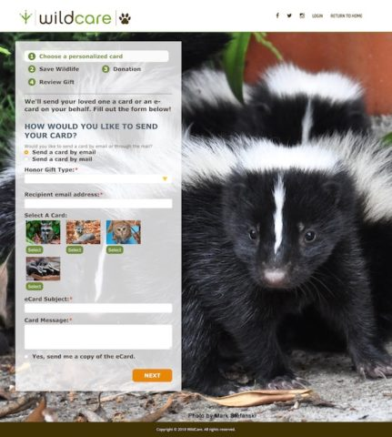 Wildcare's ecard campaign and donation form fields overlap an extra cute photo of a small, fuzzy skunk.