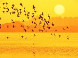 Golden silhouettes of water birds flying over water with a sunset symbolize the migration of a site in preparation for Drupal 7 End of Life